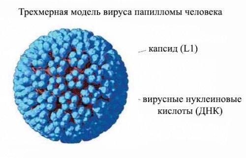 Папилломы лечение фото