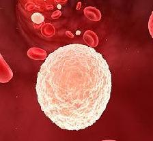 лейкоциты в крови повышены