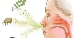 Аллергический ринит — симптомы и схема лечения