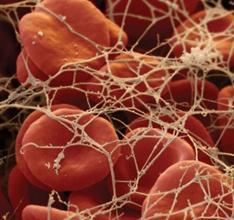 фибриноген в крови