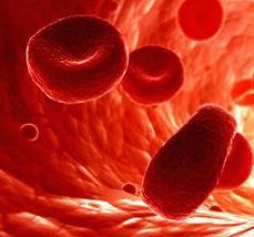 Почему больше эритроцитов в крови