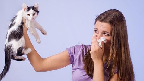 Как определить аллергию на кошек
